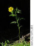 Купить «Горицвет», фото № 371351, снято 24 мая 2003 г. (c) Павел Мурадов / Фотобанк Лори