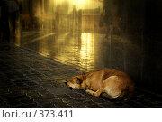 О снах привокзальной собаки. Стоковое фото, фотограф Николай Федорин / Фотобанк Лори