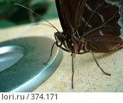 Купить «Бабочка крупным планом», фото № 374171, снято 25 июня 2008 г. (c) Софья Ханджи / Фотобанк Лори