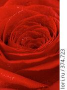 Купить «Красная роза с каплями воды. Фон», фото № 374723, снято 10 декабря 2006 г. (c) Андрей Армягов / Фотобанк Лори