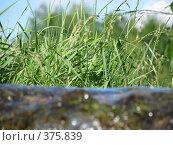 Купить «Зеленый берег», фото № 375839, снято 29 июня 2008 г. (c) Алексей Гунев / Фотобанк Лори