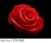 Купить «Роза на черном фоне», эксклюзивное фото № 376843, снято 25 июня 2019 г. (c) Виктор Зиновьев / Фотобанк Лори
