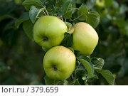 Купить «Урожай», фото № 379659, снято 26 августа 2007 г. (c) Андрей Некрасов / Фотобанк Лори