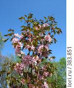 Купить «Цветущее дерево», фото № 383851, снято 3 мая 2008 г. (c) Юлия Подгорная / Фотобанк Лори