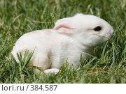 Купить «Крольчонок», фото № 384587, снято 11 апреля 2008 г. (c) Михаил Ворожцов / Фотобанк Лори