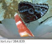 Купить «Большая бабочка, сидящая на дольке грейпфрута», фото № 384839, снято 25 июня 2008 г. (c) Софья Ханджи / Фотобанк Лори