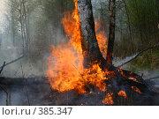 """Купить «Лесной пожар в заказнике """"Журавлиная Родина""""», фото № 385347, снято 1 мая 2008 г. (c) Анна Андреева / Фотобанк Лори"""