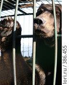 Купить «Медведь», фото № 386455, снято 21 сентября 2007 г. (c) Юлия Паршина / Фотобанк Лори