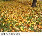 Желтые листья. Стоковое фото, фотограф Александр Мещеряков / Фотобанк Лори