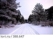 Купить «Зимняя дорога», фото № 388647, снято 5 января 2008 г. (c) Сергей Костюров / Фотобанк Лори