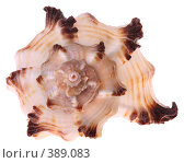 Купить «Морская раковина на белом фоне, изолировано», фото № 389083, снято 29 июля 2008 г. (c) Pshenichka / Фотобанк Лори