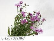 Купить «Полевые цветы на светлом фоне», фото № 389867, снято 18 ноября 2018 г. (c) Сергей  Ушаков / Фотобанк Лори