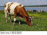 Купить «Коровка», фото № 393063, снято 2 августа 2008 г. (c) Николай Федорин / Фотобанк Лори