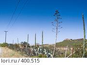 Купить «Цветы агавы. Крит. Греция», фото № 400515, снято 3 мая 2008 г. (c) Галина Лукьяненко / Фотобанк Лори