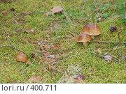 Купить «Три белых гриба», фото № 400711, снято 10 августа 2008 г. (c) Татьяна Дигурян / Фотобанк Лори
