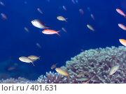 Купить «Подводный пейзаж», фото № 401631, снято 7 мая 2008 г. (c) Ольга Хорошунова / Фотобанк Лори