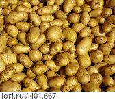 Купить «Молодой картофель», фото № 401667, снято 12 августа 2008 г. (c) Юлия Селезнева / Фотобанк Лори