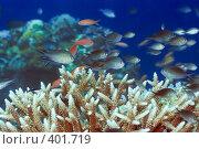Купить «Подводный пейзаж», фото № 401719, снято 8 мая 2008 г. (c) Ольга Хорошунова / Фотобанк Лори