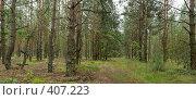 Купить «Панорама леса после дождика», фото № 407223, снято 21 июля 2008 г. (c) Андрей Рыбачук / Фотобанк Лори