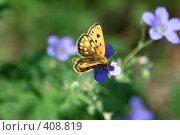 Купить «Бабочка на цветке», фото № 408819, снято 13 июня 2008 г. (c) Людмила Пашкевич / Фотобанк Лори
