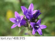 Купить «Полевые цветы», фото № 408915, снято 15 июля 2008 г. (c) Людмила Пашкевич / Фотобанк Лори