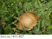 Купить «Гриб», фото № 411407, снято 28 июня 2008 г. (c) Алексей Желтов / Фотобанк Лори