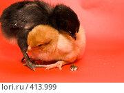 Купить «Цыплята - стыдно перед товарищем», фото № 413999, снято 19 апреля 2007 г. (c) Василий Вишневский / Фотобанк Лори