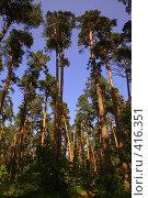 Купить «Корабельные сосны,освещенные солнцем», фото № 416351, снято 13 июля 2008 г. (c) Наталья Волкова / Фотобанк Лори