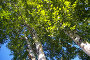 Шум листвы, фото № 417767, снято 20 августа 2008 г. (c) RedTC / Фотобанк Лори