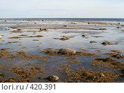Во время отлива на Белом море. Стоковое фото, фотограф Ирина Терентьева / Фотобанк Лори