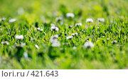 Купить «Зеленая трава, фокус на среднем плане», фото № 421643, снято 13 июня 2008 г. (c) Дмитрий Яковлев / Фотобанк Лори
