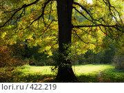 Купить «Листва дуба на просвет», фото № 422219, снято 24 сентября 2007 г. (c) Василий Вишневский / Фотобанк Лори