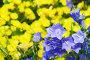 Фон из ярких цветов, фото № 423491, снято 10 июля 2008 г. (c) Евгений Захаров / Фотобанк Лори