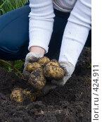 Купить «Русские национальные забавы. Копка картофеля», фото № 424911, снято 24 августа 2008 г. (c) Ирина Солошенко / Фотобанк Лори