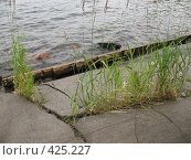 Купить «Валаам, береговая линия. Камни, трава», фото № 425227, снято 6 августа 2008 г. (c) Морковкин Терентий / Фотобанк Лори