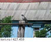 Купить «Кукушка на турнике», фото № 427459, снято 4 июня 2007 г. (c) Фёдоров Дмитрий / Фотобанк Лори