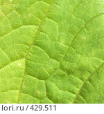 Купить «Поверхность листа растения», фото № 429511, снято 23 августа 2008 г. (c) pzAxe / Фотобанк Лори