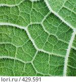 Купить «Поверхность листа растения», фото № 429591, снято 23 августа 2008 г. (c) pzAxe / Фотобанк Лори