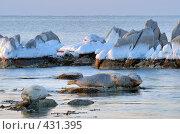 Пробуждение тюленей (2008 год). Редакционное фото, фотограф Владимир Серебрянский / Фотобанк Лори