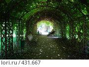 Купить «Арка с растениями», фото № 431667, снято 23 августа 2008 г. (c) Софья Ханджи / Фотобанк Лори