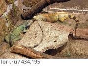 Купить «Варан», фото № 434195, снято 9 июня 2008 г. (c) Parmenov Pavel / Фотобанк Лори