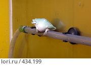 Купить «Лягушка на трубе», фото № 434199, снято 9 июня 2008 г. (c) Parmenov Pavel / Фотобанк Лори