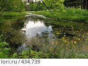 Купить «Пейзаж с заросшим прудом», фото № 434739, снято 14 июня 2008 г. (c) Дмитрий Яковлев / Фотобанк Лори