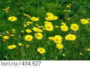 Купить «Желтые цветы», фото № 434927, снято 13 мая 2008 г. (c) Зябрикова Надежда / Фотобанк Лори