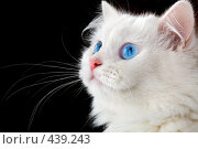 Купить «Портрет белого кота», фото № 439243, снято 3 сентября 2008 г. (c) Андрей Армягов / Фотобанк Лори