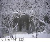 Купить «Водоем зимним утром», фото № 441823, снято 13 января 2008 г. (c) Стучалова Наталия / Фотобанк Лори
