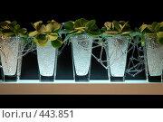 Купить «Пять ваз с растениями на черном фоне», фото № 443851, снято 5 сентября 2008 г. (c) Ekaterina Chernenkova / Фотобанк Лори