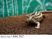 Ящерица на фактурной поверхности на зеленом фоне. Стоковое фото, фотограф Сергей Русаков / Фотобанк Лори