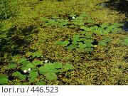 Купить «Болото», фото № 446523, снято 17 июля 2008 г. (c) Мария Левочкина / Фотобанк Лори