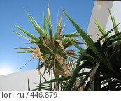 Купить «Пальмы», фото № 446879, снято 30 декабря 2005 г. (c) Артём Дудкин / Фотобанк Лори